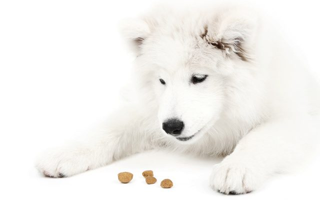 Why sell Hosted PBX if you won't dogfood it?